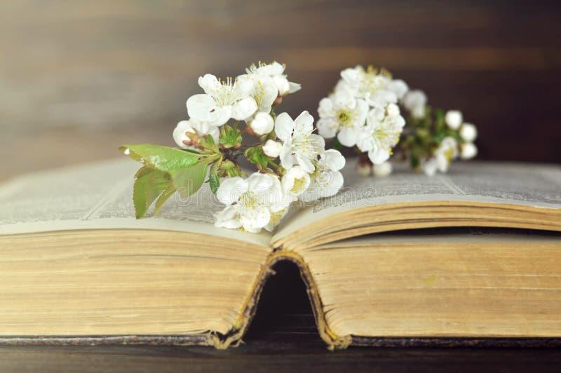 Цветки весны на открытой старой книге Вишневый цвет и старая книга стоковая фотография