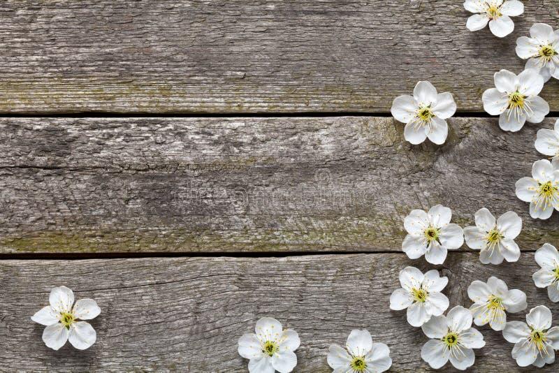 Цветки весны стоковое изображение rf