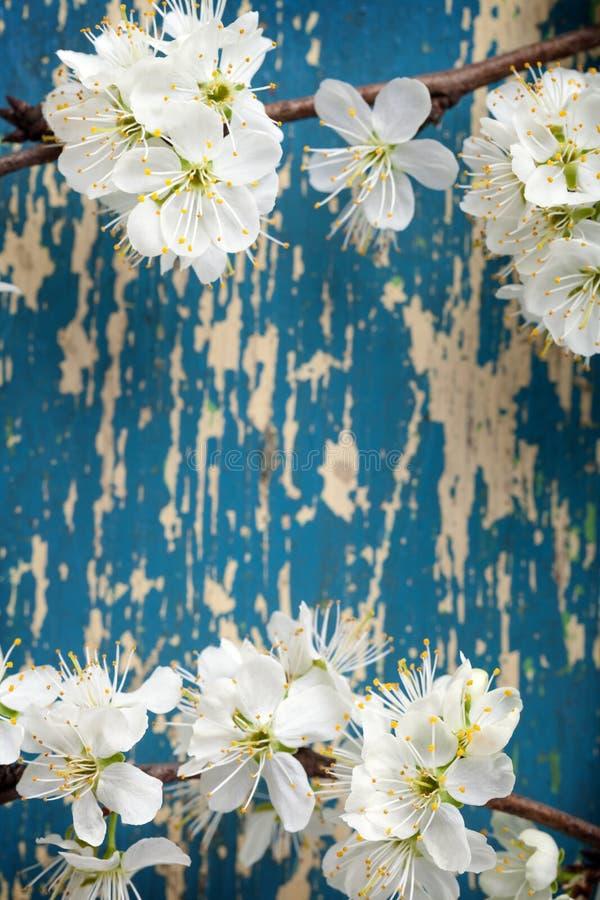 Цветки весны стоковое фото