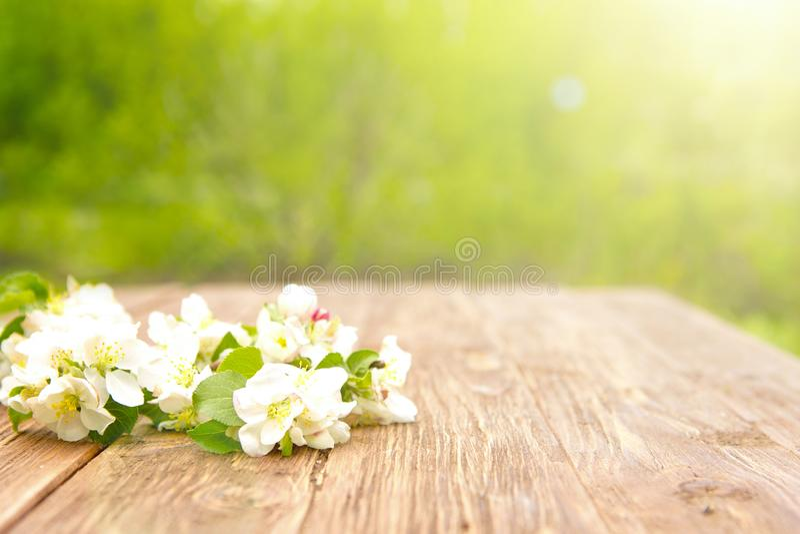 Цветки весны blossoming ветвей яблони на деревенском деревянном столе над зеленым садом sunbeam стоковое изображение rf