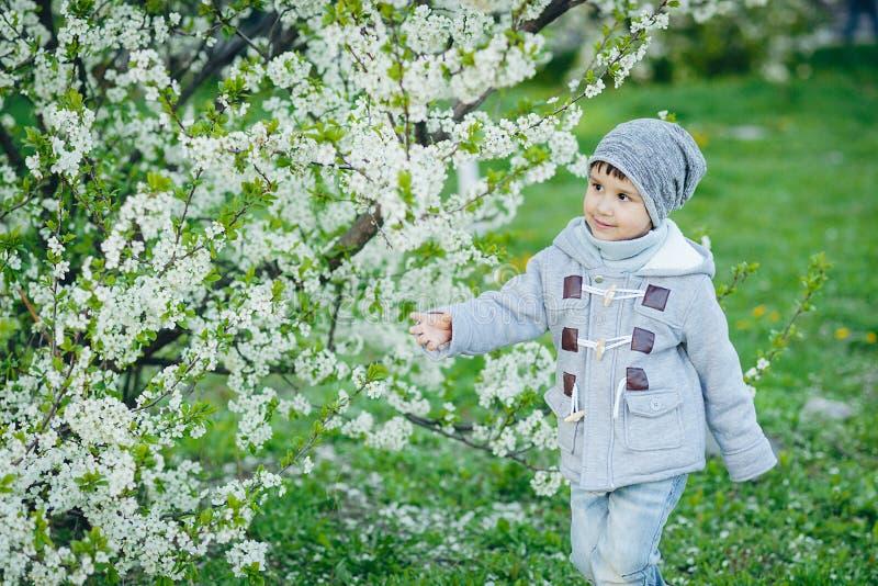 Цветки вишневого дерева мальчика пахнуть зацветая на весне стоковое изображение