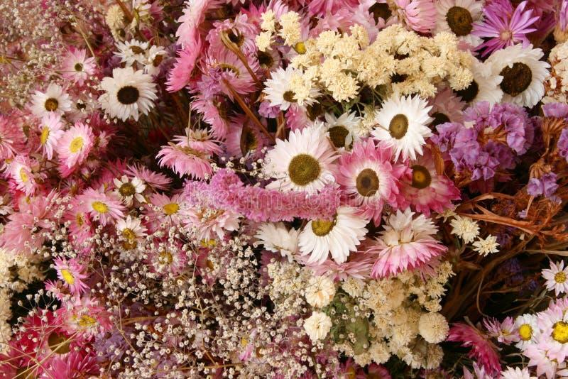 цветки высушенные украшением стоковая фотография rf