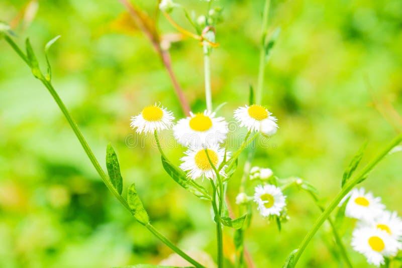 Цветки в белой заводи глины стоковое фото