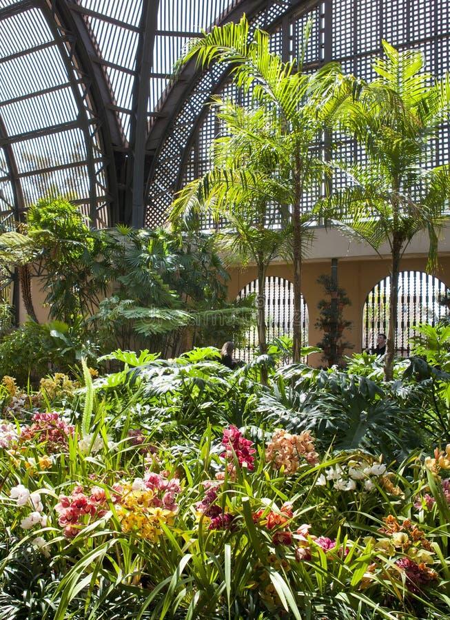 Цветки в ботаническом здании. Сан-Диего стоковые изображения rf
