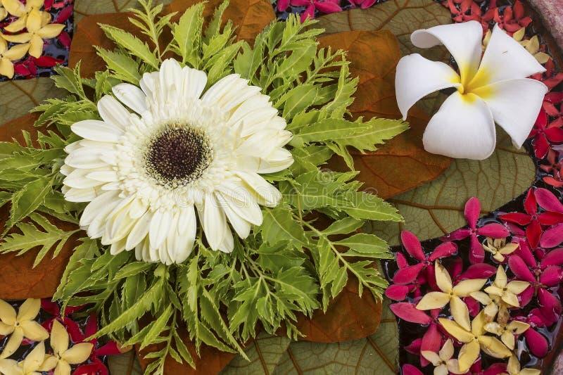 Цветки в воде стоковое фото rf