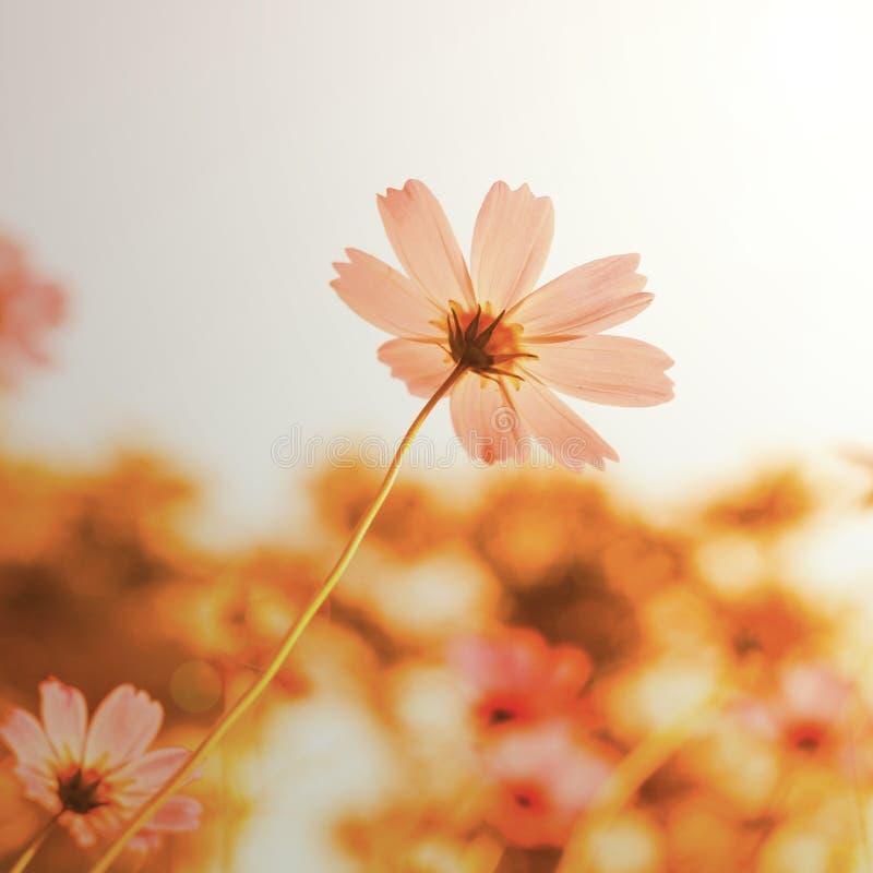 Цветки в зацветать с заходом солнца стоковое изображение