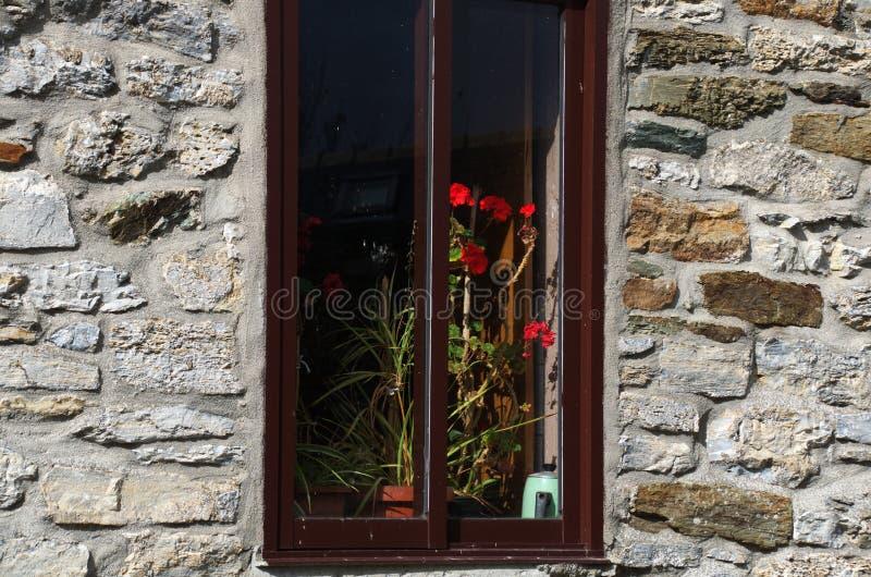 Цветки в окне стоковое фото rf
