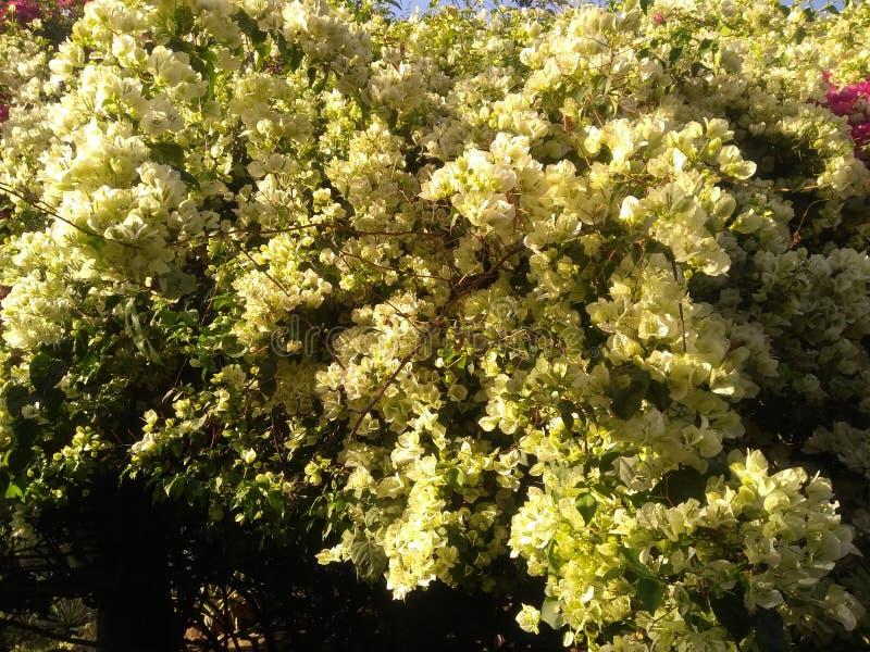 цветки в парке смотрят настолько красивыми с зелеными листьями стоковая фотография