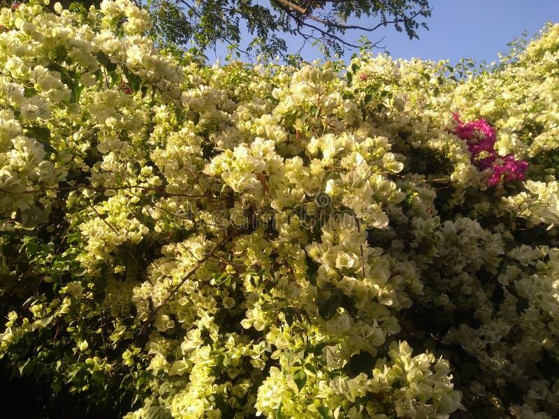 цветки в парке смотрят настолько красивыми с зелеными листьями стоковое изображение rf