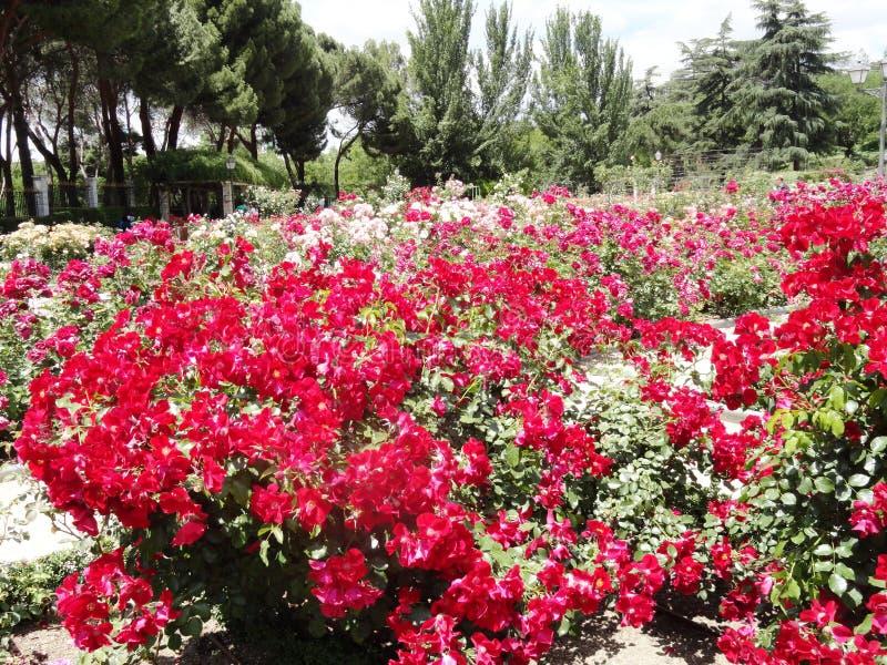 Цветки в парке retiro стоковое фото