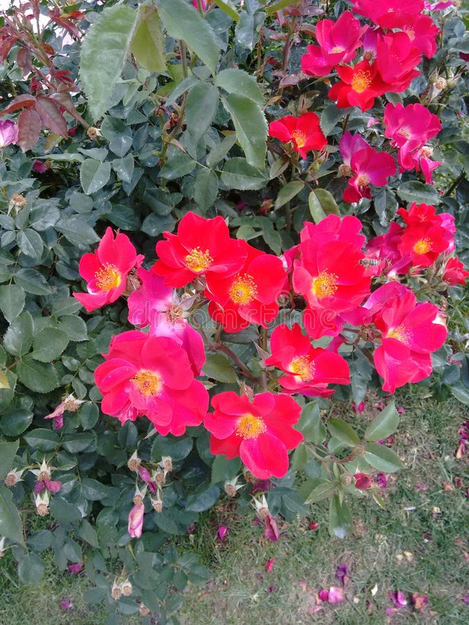 Цветки в парке retiro стоковые изображения rf