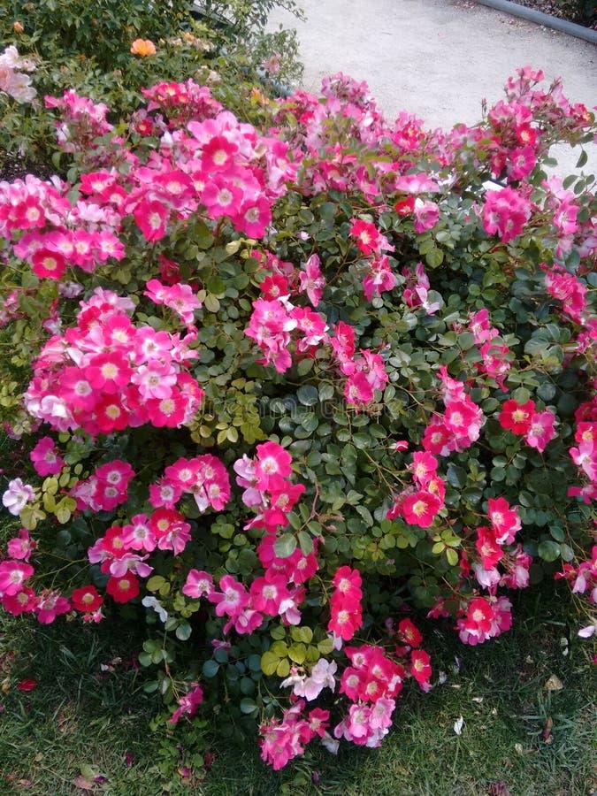 Цветки в парке retiro стоковое изображение rf