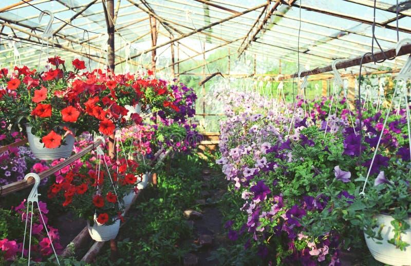 Цветки в парнике стоковое изображение rf