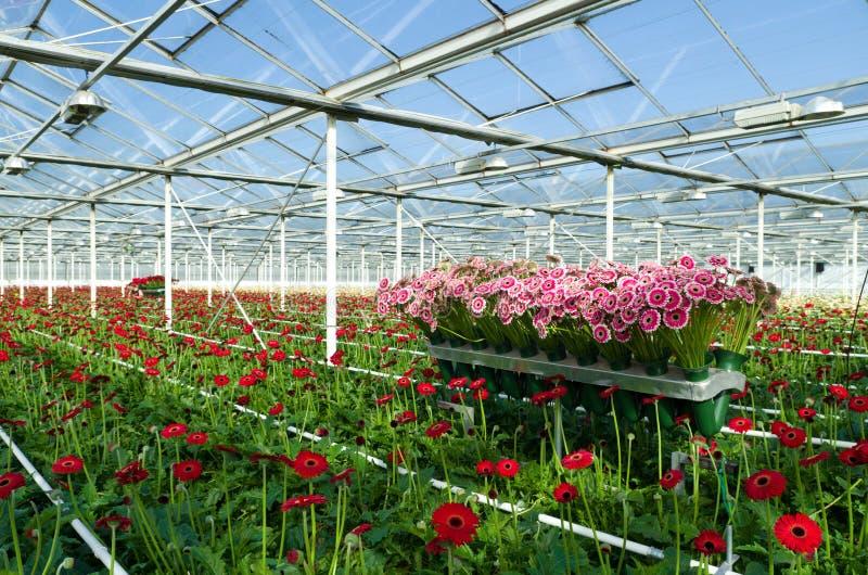 Цветки в парнике стоковое фото rf