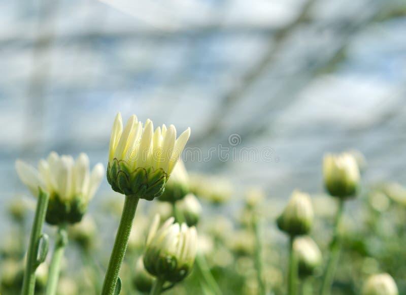 Цветки в парнике стоковые фото