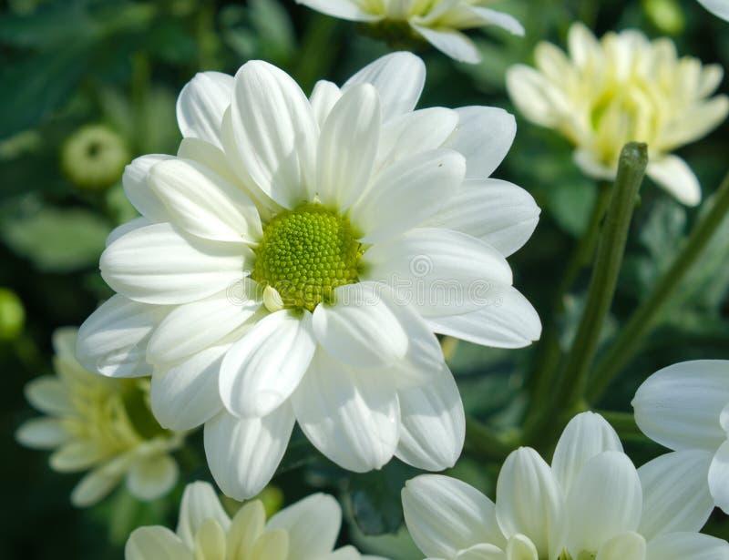 Цветки в парнике стоковые изображения
