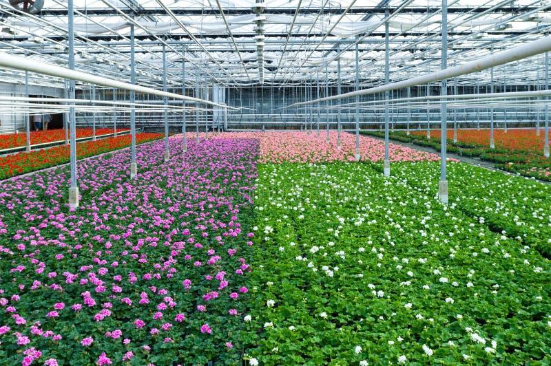 Цветки в парнике стоковые фотографии rf