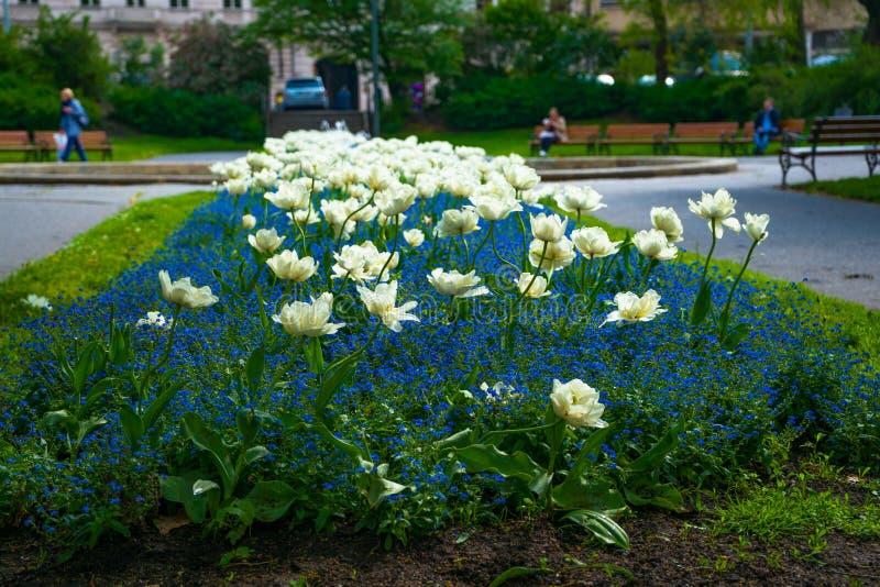 Цветки в Праге летом, чехией, красивым видом стоковые фотографии rf