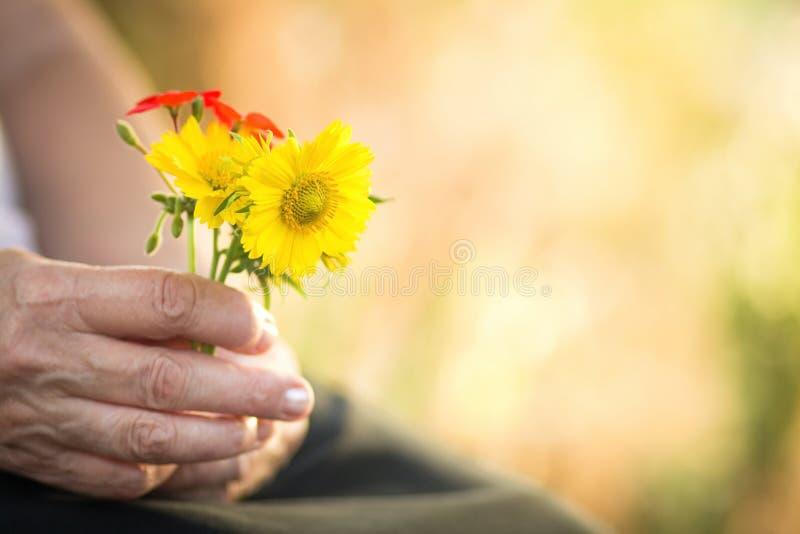 Цветки в руках пожилой женщины стоковая фотография rf