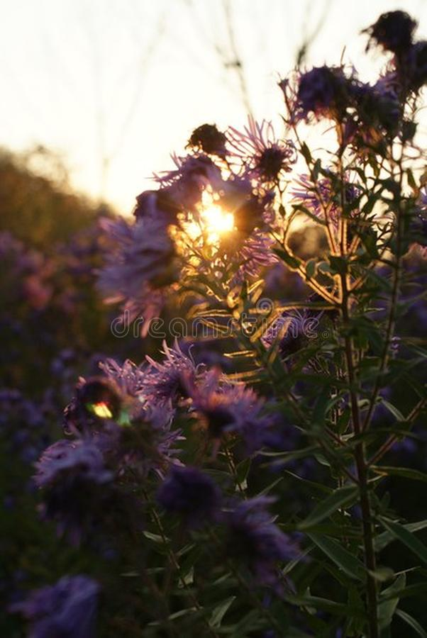 Цветки в саде красивейший заход солнца стоковые изображения rf