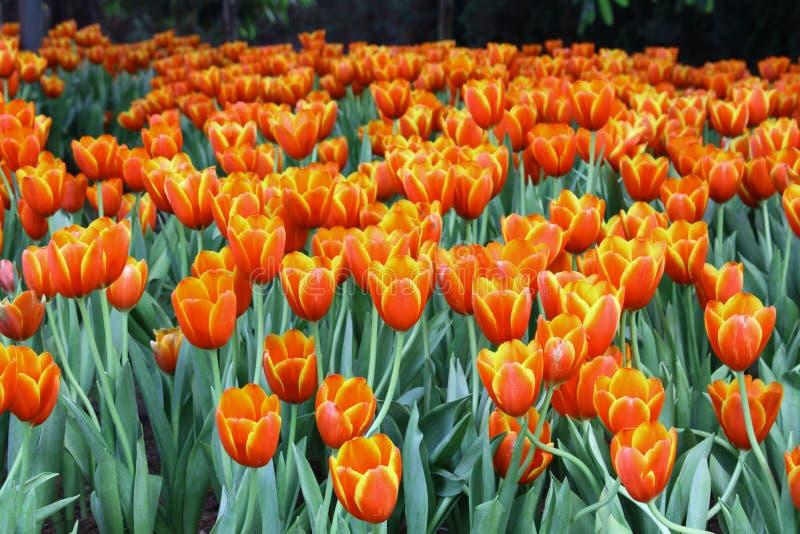 Цветки в саде стоковая фотография