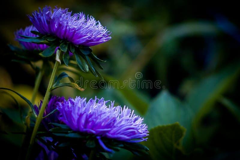 Цветки в саде стоковое изображение