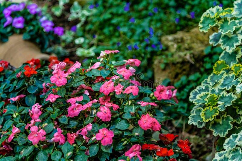 Цветки в скалистом саде стоковые изображения rf