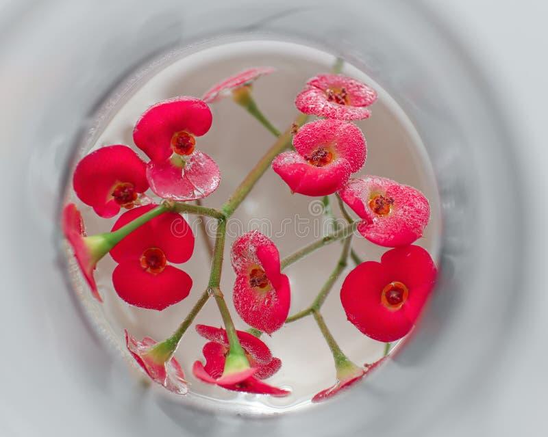 Цветки в склянке, крупном плане стоковые изображения