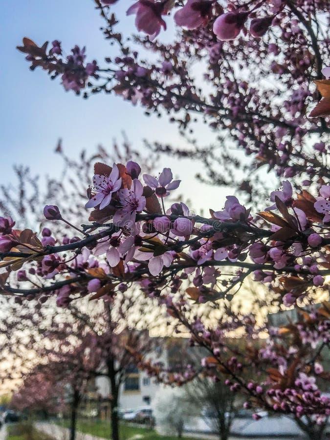 Цветки в славной весне стоковые изображения rf