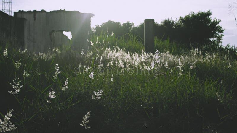 Цветки в солнечном свете красивом стоковое фото rf