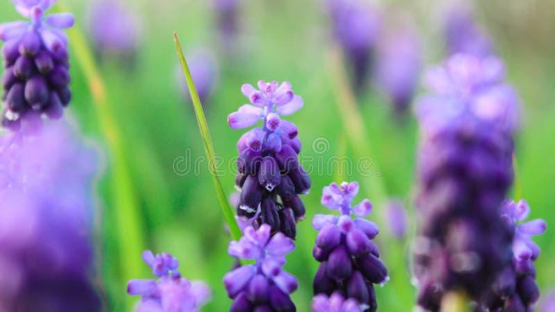 Цветки в утре стоковые фотографии rf