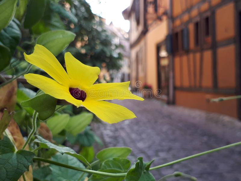 Цветки в Alsancia, Франции стоковые изображения
