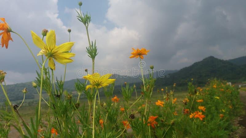 Цветки в jogja kayang запруды стоковое фото