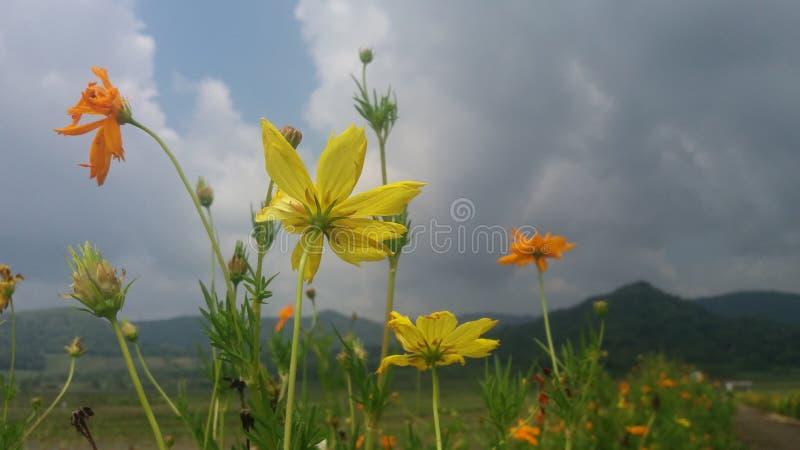 Цветки в jogja kayang запруды стоковая фотография rf
