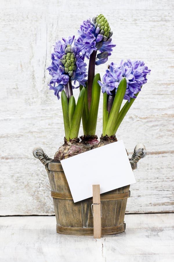 Цветки гиацинта в деревянном баке стоковое фото