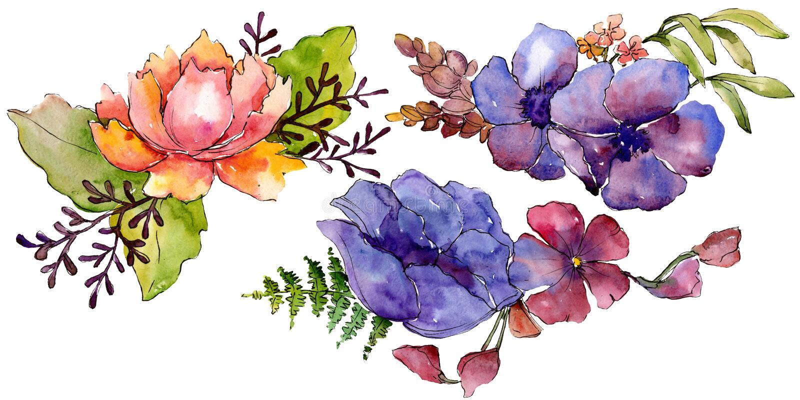 Цветки голубого пурпурного букета флористические ботанические r Изолированный элемент иллюстрации букетов иллюстрация вектора