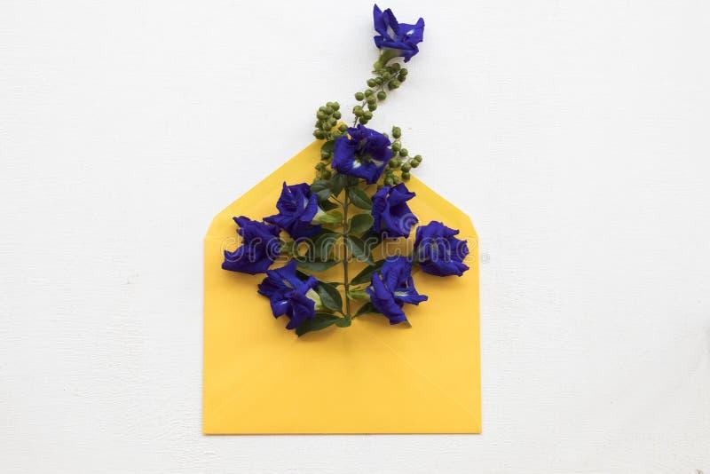 Цветки гороха бабочки местные Азии в конверте стоковые фото