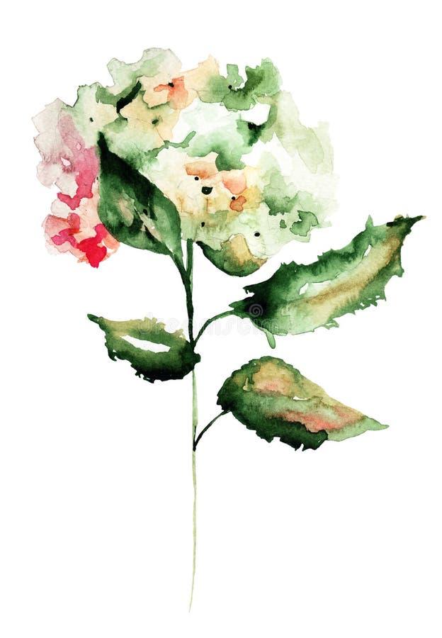 Цветки гортензии иллюстрация вектора