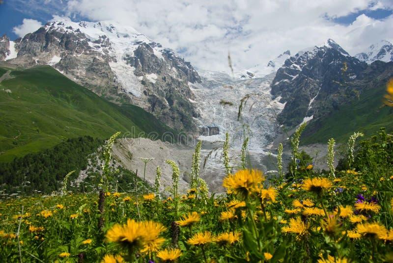 Цветки горы стоковая фотография rf