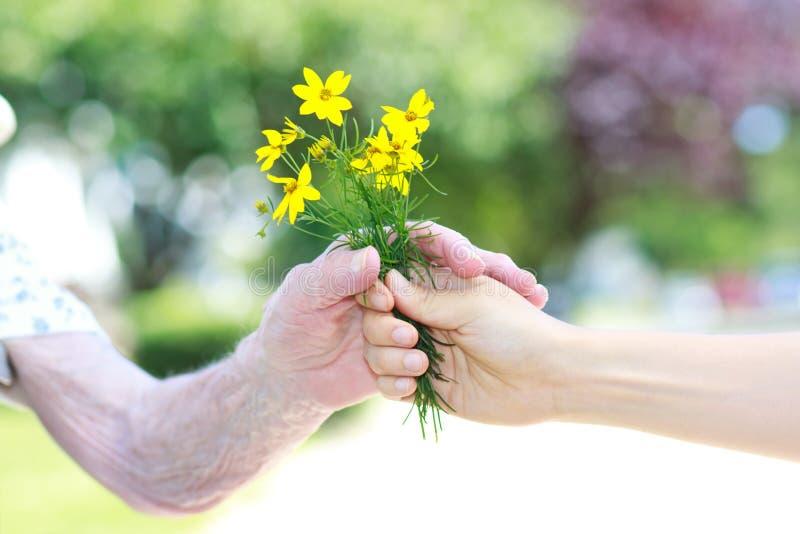 цветки давая старший к желтому цвету женщины стоковые изображения