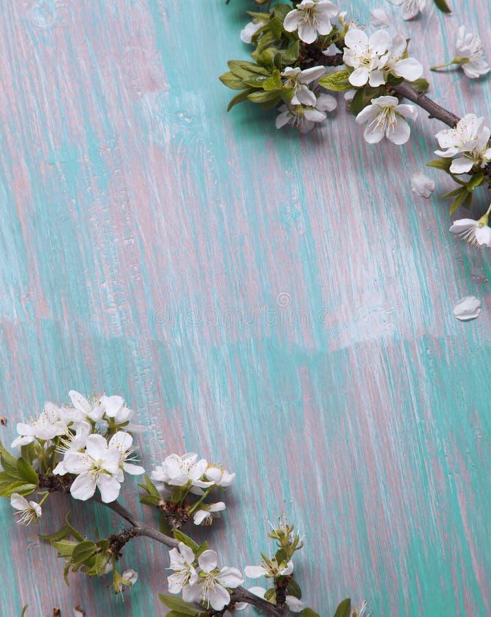 Цветки дерева весны на старой винтажной голубой предпосылке доски стоковая фотография