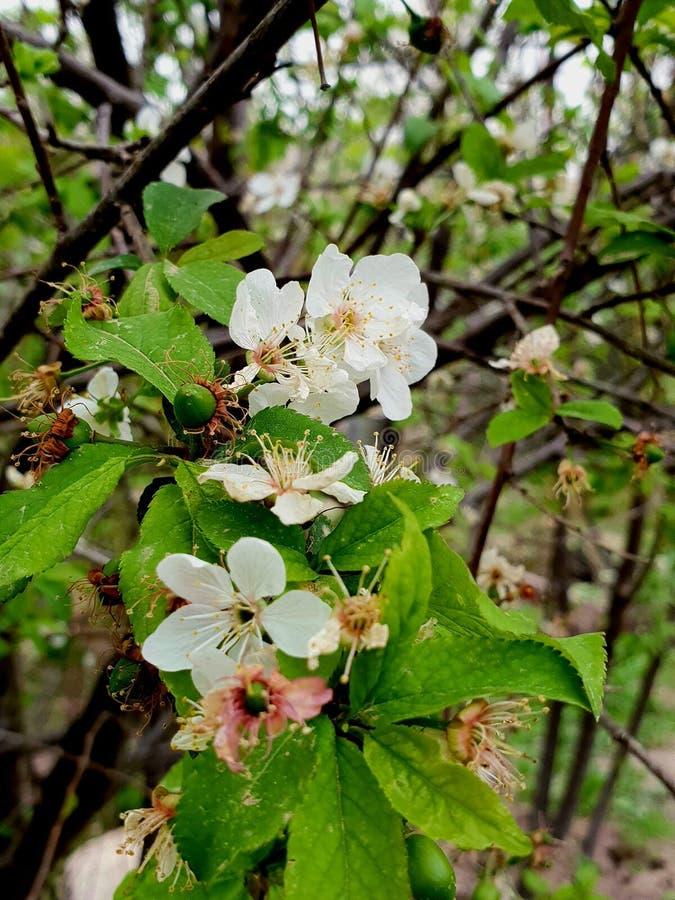 Цветки дерева стоковые изображения rf