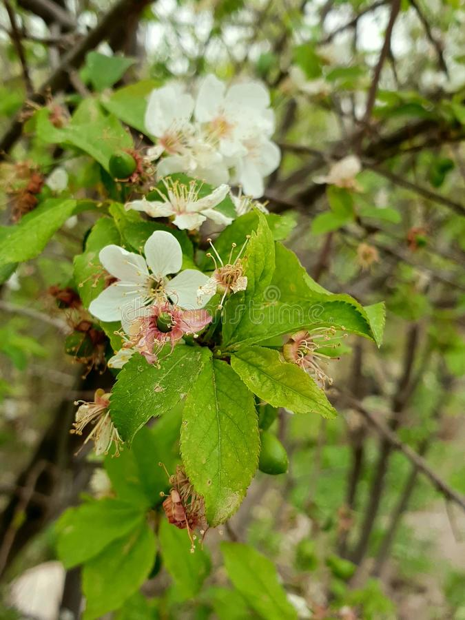 Цветки дерева стоковая фотография