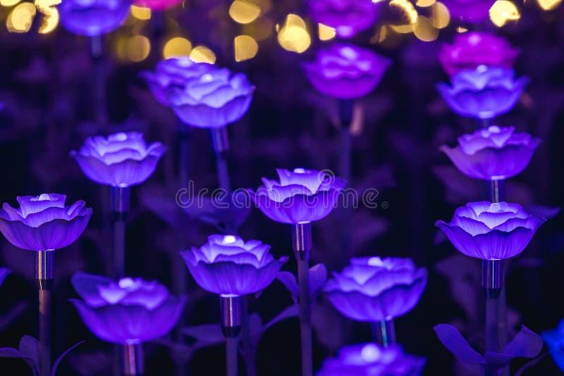 Цветки для создания красивого света стоковая фотография rf