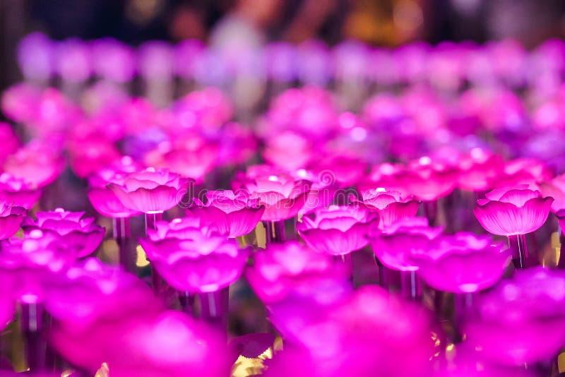 Цветки для создания красивого света стоковые изображения rf