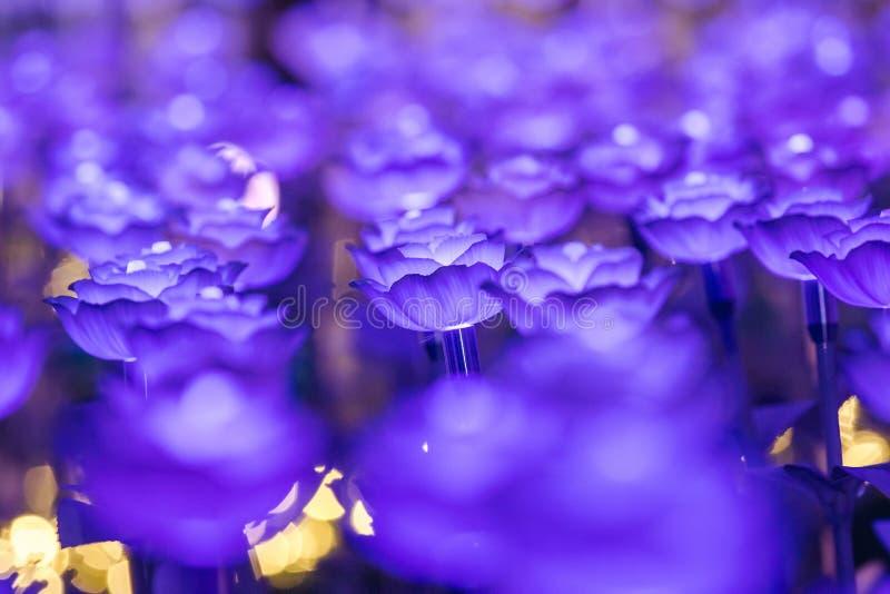 Цветки для создания красивого света стоковое изображение rf