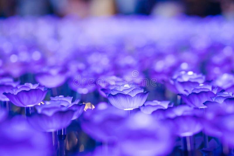 Цветки для создания красивого света стоковые фото
