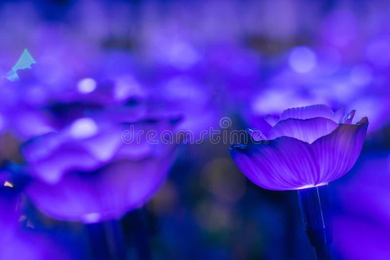 Цветки для создания красивого света стоковые фотографии rf