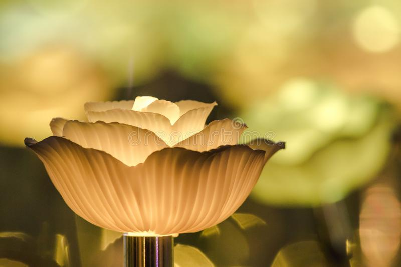 Цветки для создания красивого света стоковое фото