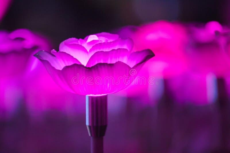 Цветки для создания красивого света стоковые изображения